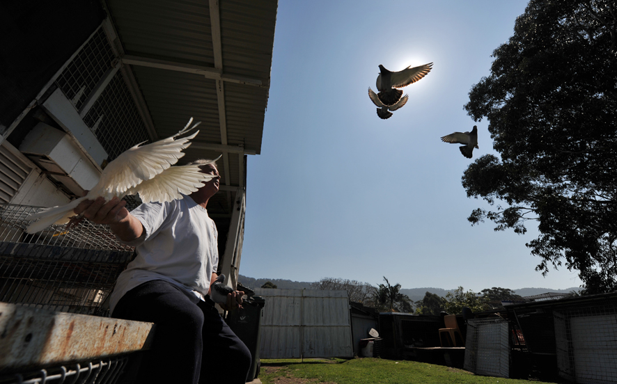 Dick Whitehead is a retiree who recently won a nationwide pigeon racing event.